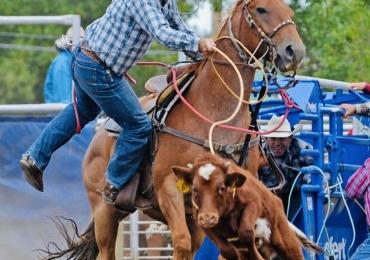 12 year old, calf, break away, head, heel horse