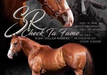 Stallion for stud
