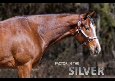 Factor In The Silver