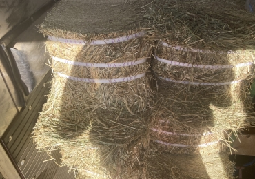 Compressed square hay bales