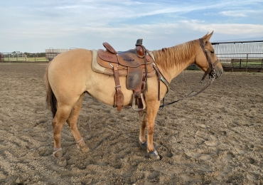 Rope/Ranch pony