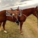 Molly Powwell X Reinsman Barrel Saddle