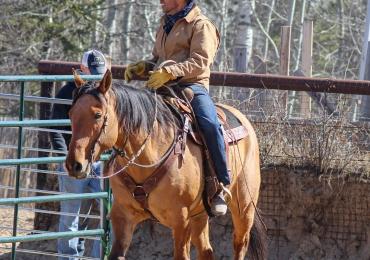 2012 Ranch Horse