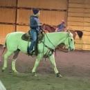 19 yr old barrel horse