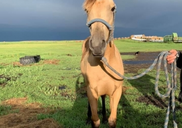 Registered yearling Filly