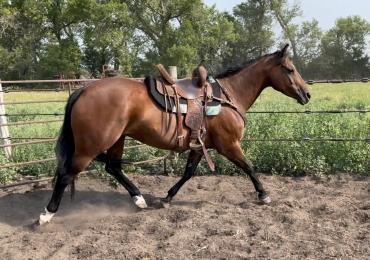 10 year old AQHA mare