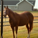 10 Year Old Mare