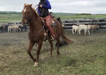 Ranch Gelding