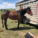 Four Year Old Mare
