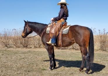 2014 AQHA mare