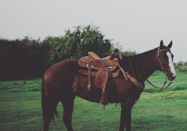 Head/Heel Horse