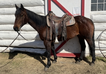 2013 AQHA Mare. Ranch, barrels, rope pen.